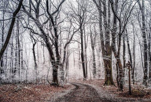 Wood, Tree, Landscape, Nature, Season, Winter, Frost