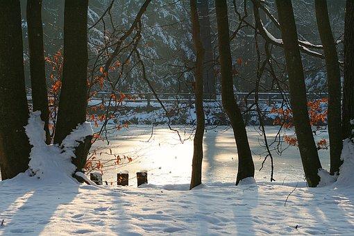 Tree, Winter, Nature, Snow, Ice, Lake