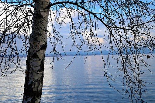 Birch, Water Surface, Lake, Tree, Nature, The Horizon