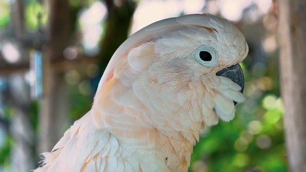 Bird, Feather, Parrot, Wildlife, Nature, Wing