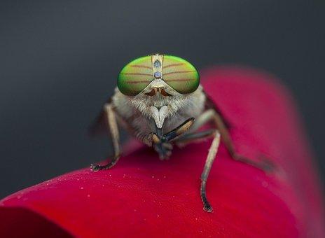 Insect, Invertebrate, Fly, Wildlife, Animal