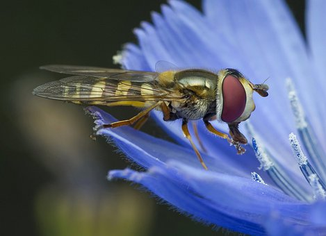 Insect, Nature, Fly, Animal, Wing
