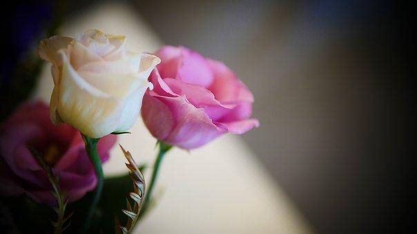 Flower, Nature, Flora, Beautiful, Petal, Love, Blossom