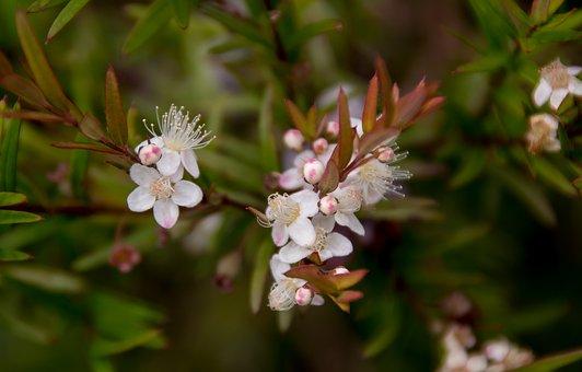 Flower, White, Blossom, Midgen Berry