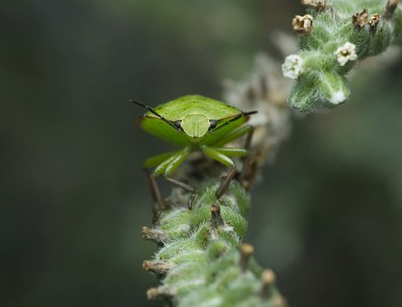 Leaf, Insect, Nature, Outdoors, Flora, Garden, Flower