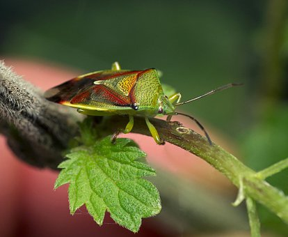 Insect, Nature, Wildlife, Animal, Butterfly