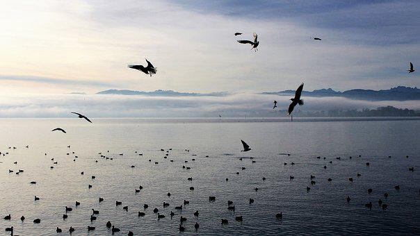 Birds, Lake, Morning, Monolithic Part Of The Waters