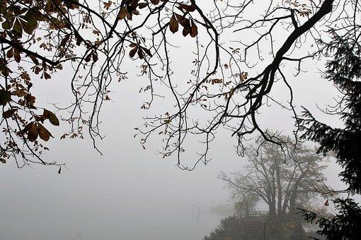 Tree, Gałązie, Nature, Landscape, Season, Foliage, View