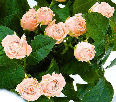 Rose, Love, Flower, Composition, Bouquet Of Roses