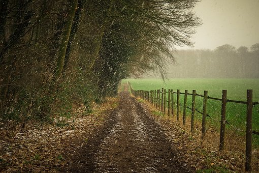 Forest, Nature, Landscape, Fog, Trees, Cold, Wintry