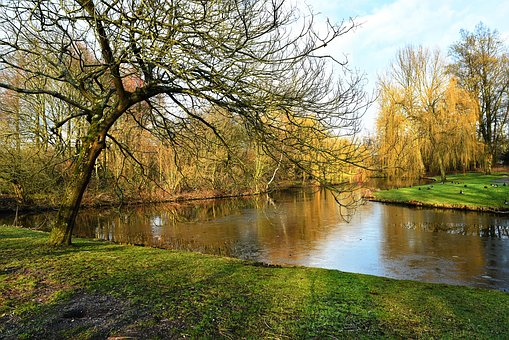 Pond, Water, Lake, Banks, Tree, Grass, Park, Landscape