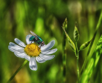 Fly, Nature, Insect, Summer, Meadow, Plant, Flower