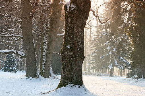 Winter, Snow, Tree, Frost, Cold
