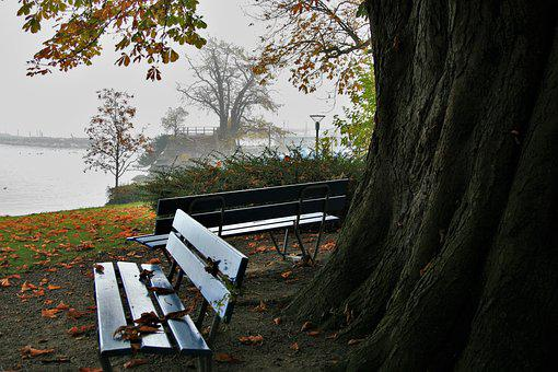 Tree, At The Court Of, No One, Nature, Leaf, Day, Lake