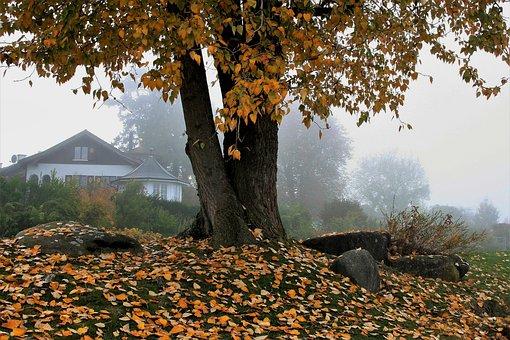 House, Park, View, Autumn, Tree, Leaf, Nature, Season