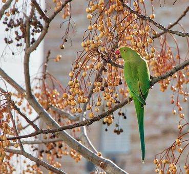 Tree, Branch, Season, Nature, Flora, Outdoors, Bird