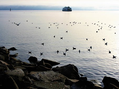 Water, Ferry, Cruise, The Seagulls