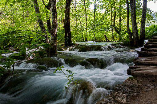 Nature, Waters, Wood, River