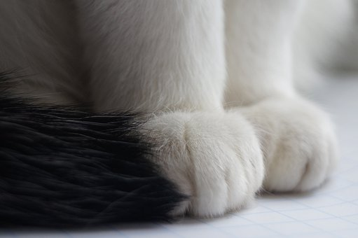 Downy, Fur, Soft Material, Animal, Cat, Paw, White