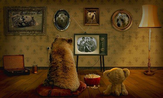 Bear, Teddy, Television, Coziness, Entertainment