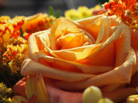 Flower, Rose, Wedding, Give, Bouquet, Petal, Floral