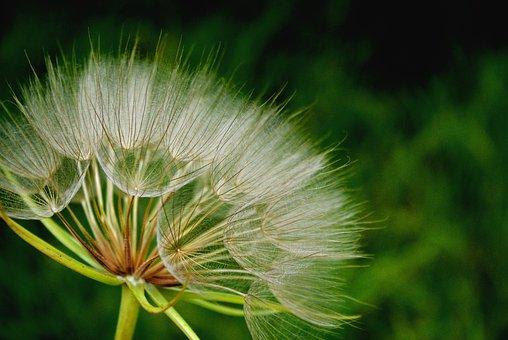 Nature, Summer, Flora, Grass, Flower, Outdoors, Bright