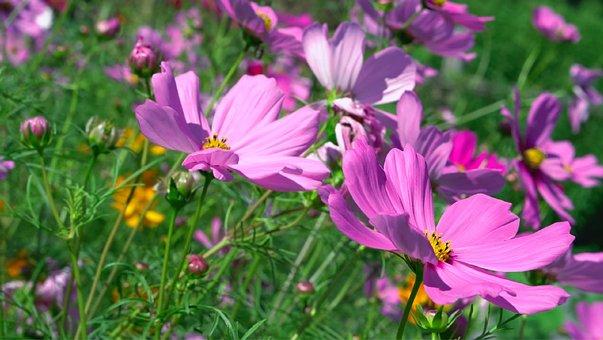 Nature, Flower, Flora, Summer, Garden, Beautiful