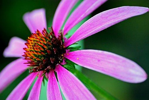 Nature, Flower, No One, Plant, Summer, Garden, Alive