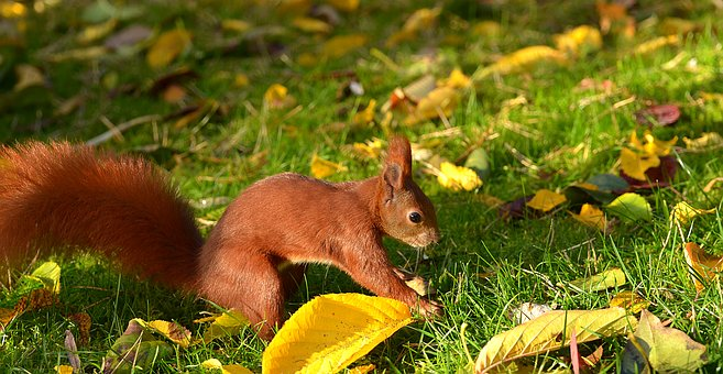 Nature, Grass, Cute, Squirrel, Animal, Meadow, Garden