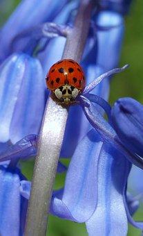 Nature, Flower, Flora, Color, Garden, Insect, Floral