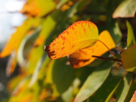 Nature, Autumn, Leaf, Plant, Tree, Bush, Forest, Green