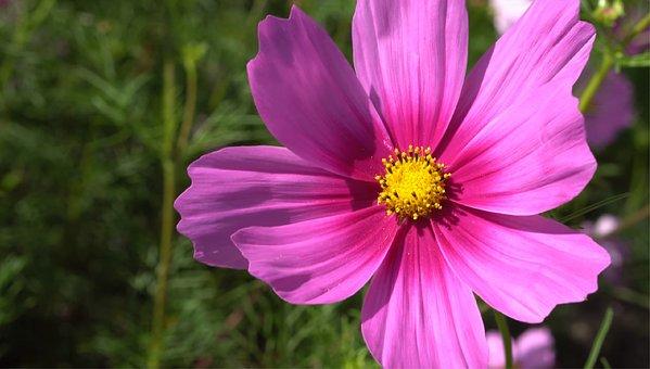 Nature, Flower, Flora, Summer, Garden, Petal