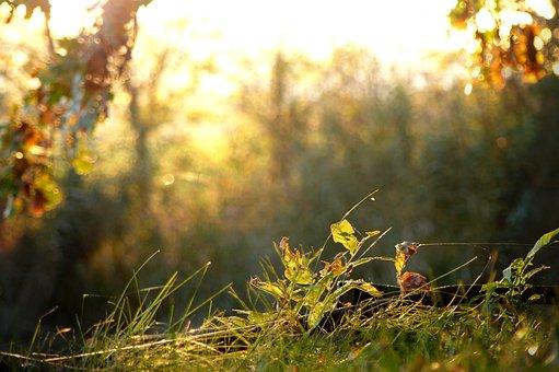 Nature, Tree, Wood, Landscape, Sun, Autumn, Grass, Dusk