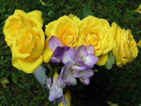 Flower, Nature, Flora, Garden, Leaf, Floral, Rose