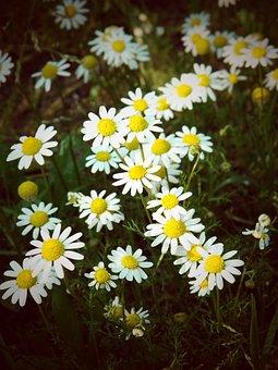 Flower, Nature, Flora, Summer, Floral, Field, Grass