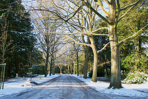 Avenue, Tree, Nature, Landscape, Winter, Snow, Forest