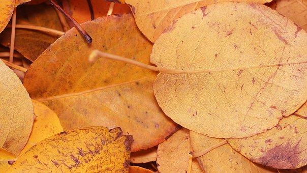Sheet, Dry, Autumn, Autumn Nature, Autumn Leaves