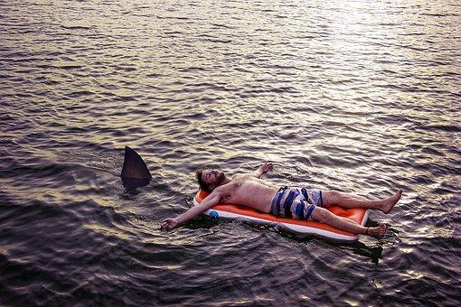 Water, Sea, Ocean, Leisure, Float, Shark, Holiday