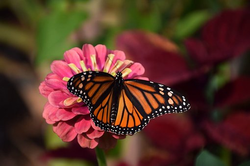 Nature, Butterfly, Flower, Insect, Outdoors