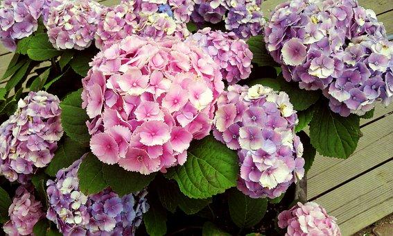 Flowers, Plants, Nature, Leaf, Garden, Floral