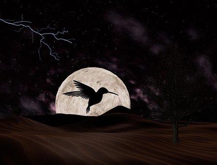 Moon, Bird, Night, Sky Moon, Silhouette