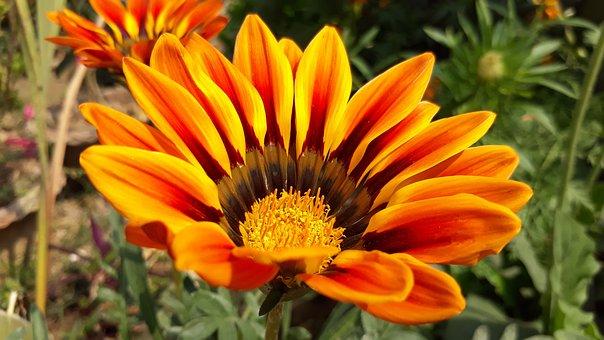 Nature, Flora, Flower, Summer, Garden, Bright, Blooming