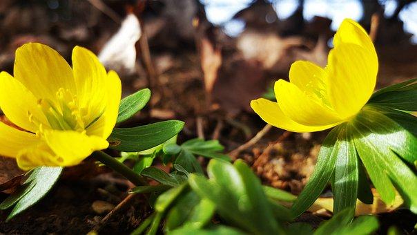 Nature, Plant, Flower, Leaf, Season, Petal, Bright