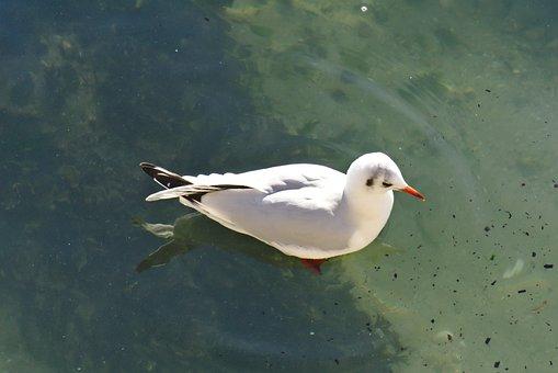 Bird, Nature, Body Of Water, Fauna, Outdoor, Sea