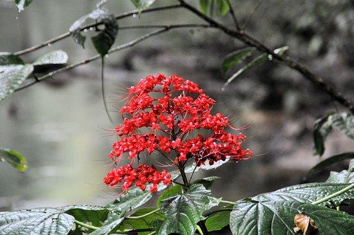 Nature, Leaf, Tree, Plant, Season, Rainforest, Floral