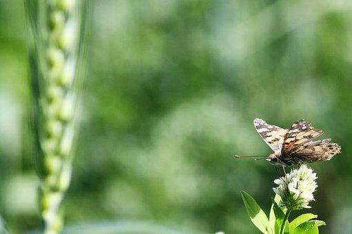 Nature, Outdoors, Leaf, Summer, Flora, Butterfly