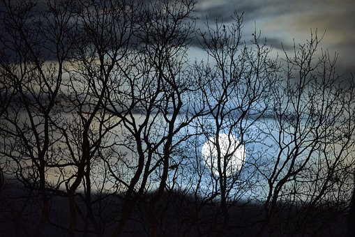 Tree, Wood, Landscape, Nature, Wallpaper, Moon, Night