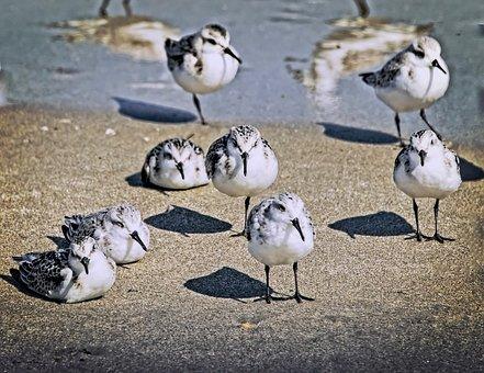 Bird, Nature, Wildlife, Animal, Outdoors, Beach, Sand
