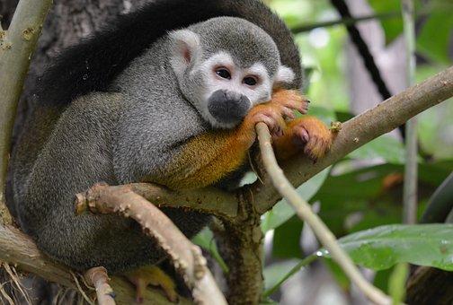 Animal World, Monkey, Cute, Zoo
