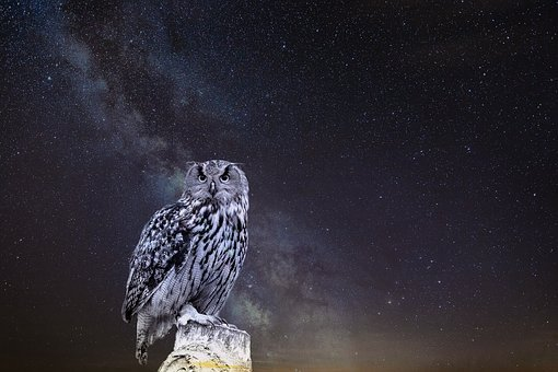 Nature, Night, Bird, Star, Owl, Eagle Owl